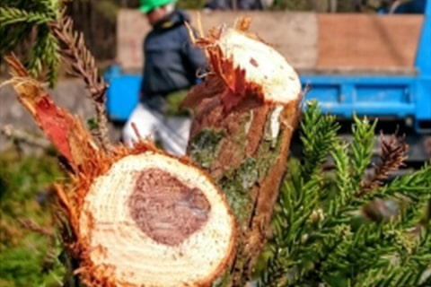庭手入れ・植木伐採・剪定